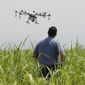 Standards and regulation in agri-tech