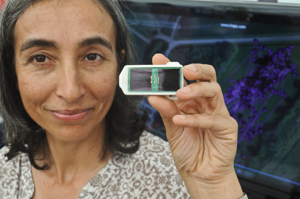 Aldina Franco with the sensor, with the map of the sheep's movements behind