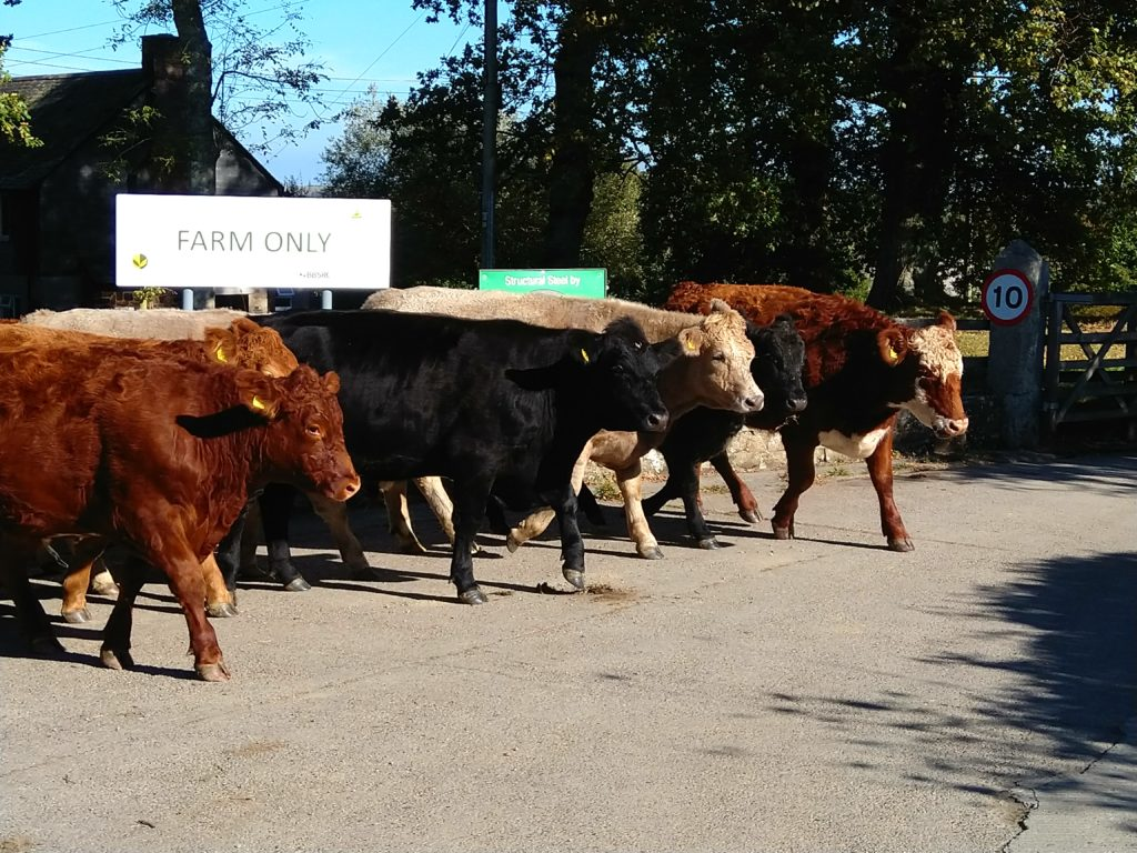 Breedr announces peak profit cattle emissions livestock farmers trial with Rothamsted Research
