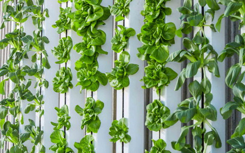 Bringing The Outside In - vertical farming
