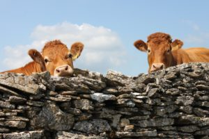 Response to Godfray TB review, cows, cattle