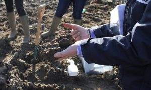 Ruminating on the Role of Digestate in Managing Healthy Soils