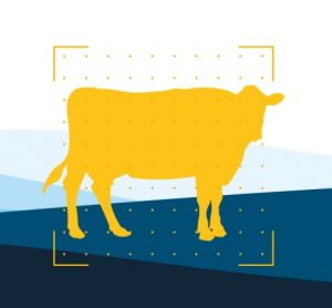 Breedr shows how livestock farmers can generate real value from EID tags