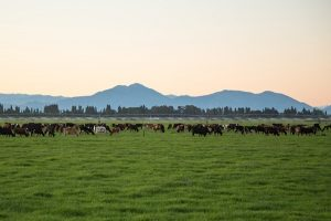 Exporting High Farming and Food Standards From the UK and NZ
