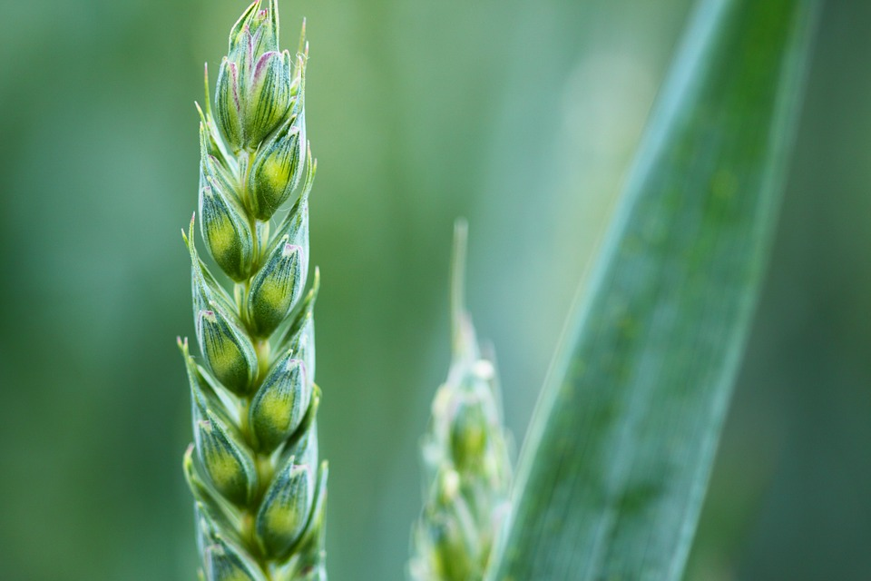 Early detection of seed and grain disease