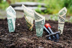 american notes being grown in soil