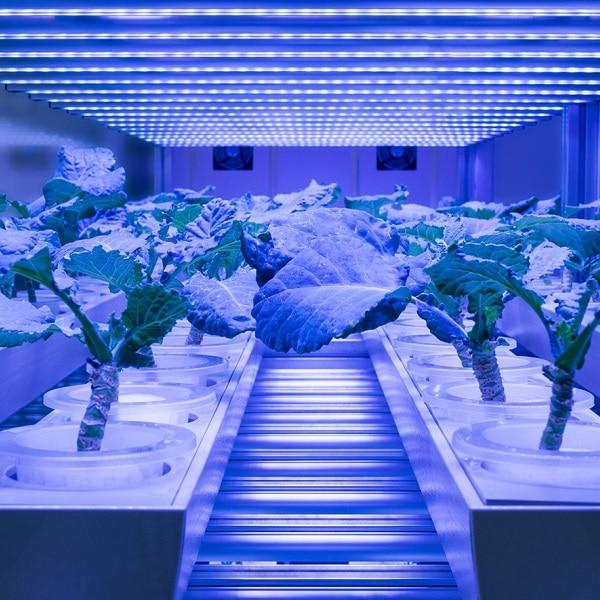 Cambridge Consultants vertical farming white paper