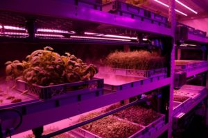 LettUs Grow - aeroponic systems