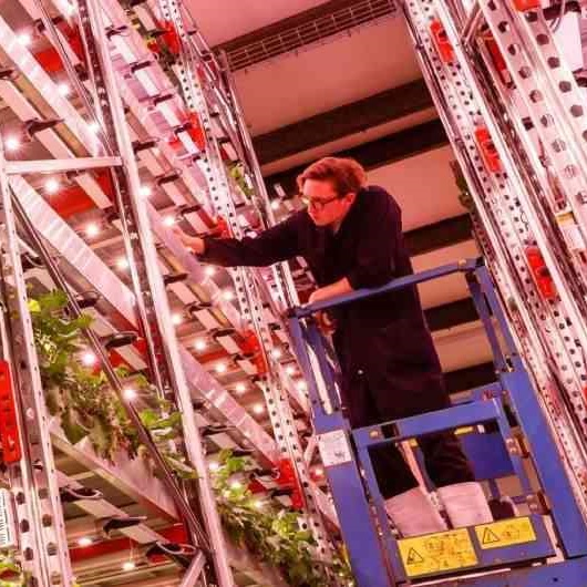 Savills - vertical farming has stacks of potential