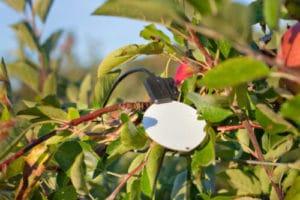 Sencrop Leafcrop