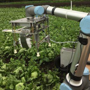 Vegebot harvesting lettuces