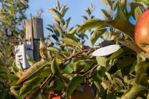 Leafcrop from Sencrop