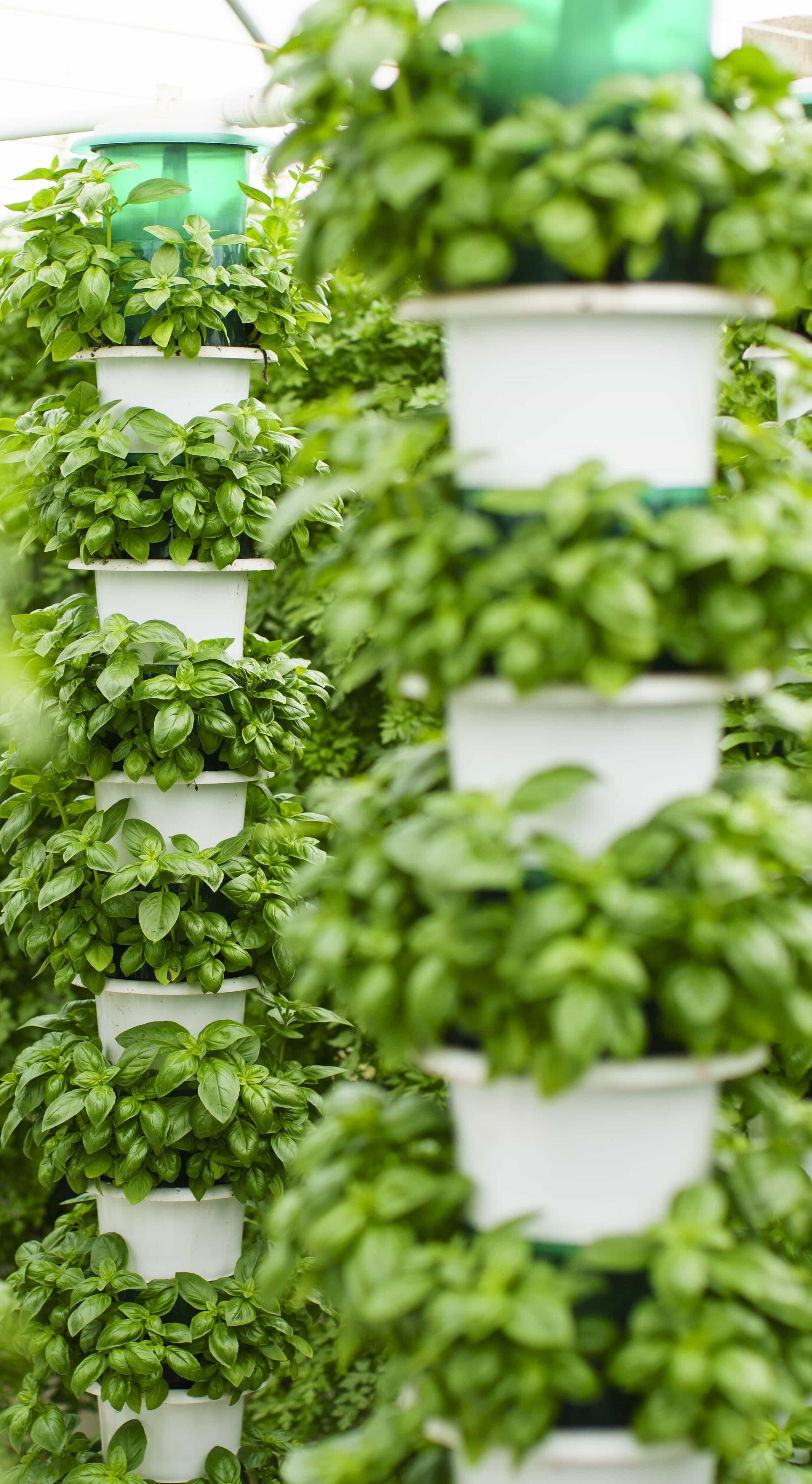 CE agriculture by Saturn Bioponics