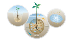 UPL Zeba is a patented soil enhancement technology, the culmination of a research led by USDA.