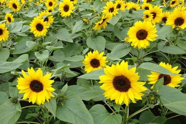 Novel and alternative crops