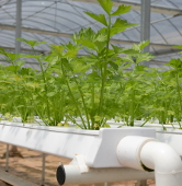Controlled Environment Ag is growing up