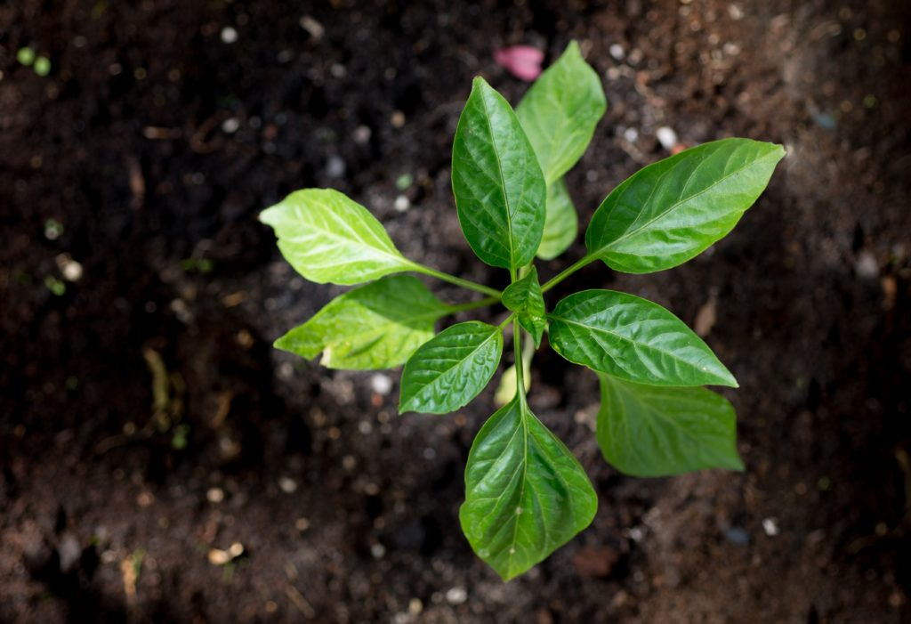 Agri-TechE presents GROW business plan competition for next Big Thing in agri-tech