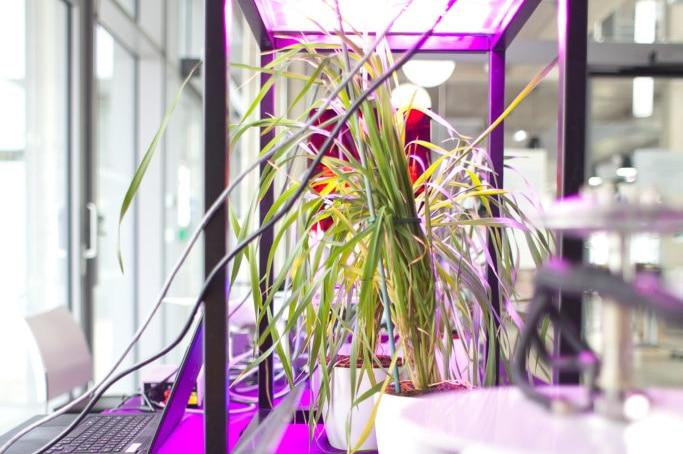 YIF Essex Plant Innovation Centre – University of Essex