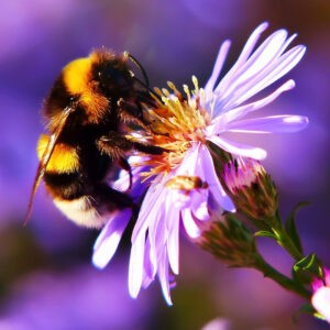 Vomiting bumblebees show that sweeter is not necessarily better