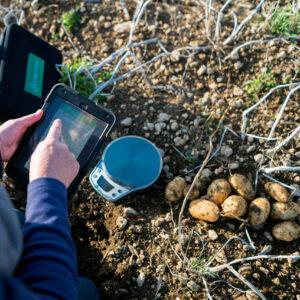 Benchmarking potato yields