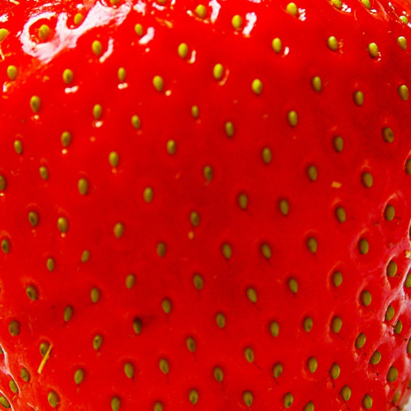 computer vision system to predict disease risk of Essex collaborates with Wilkin & Sons using IoT and Computer Vision to boost strawberry crop