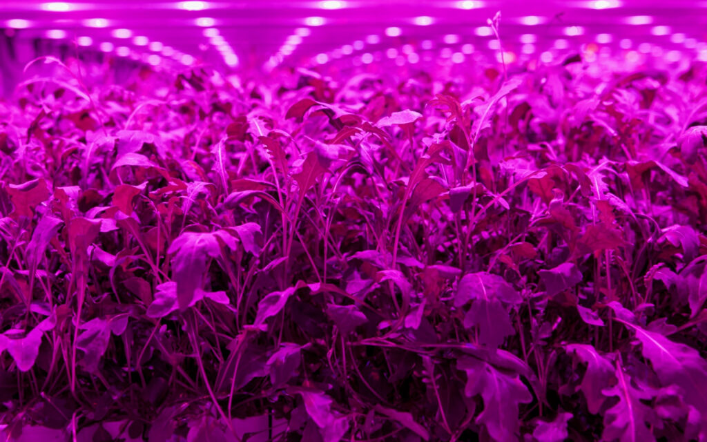 Light Science Technologies vertical farming