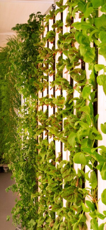 Square Mile Farms Indoor growing