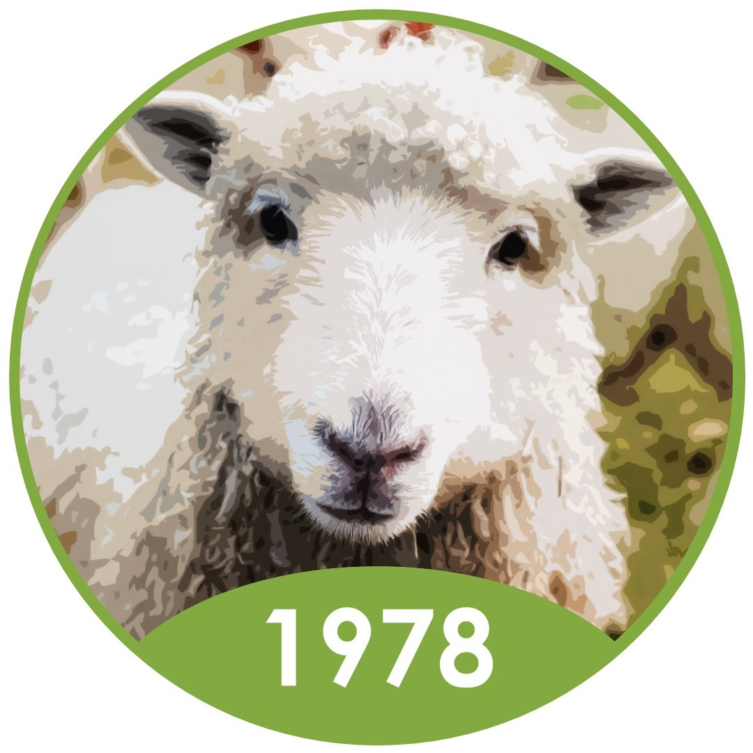 What does a sheep's expression tell us about their health?