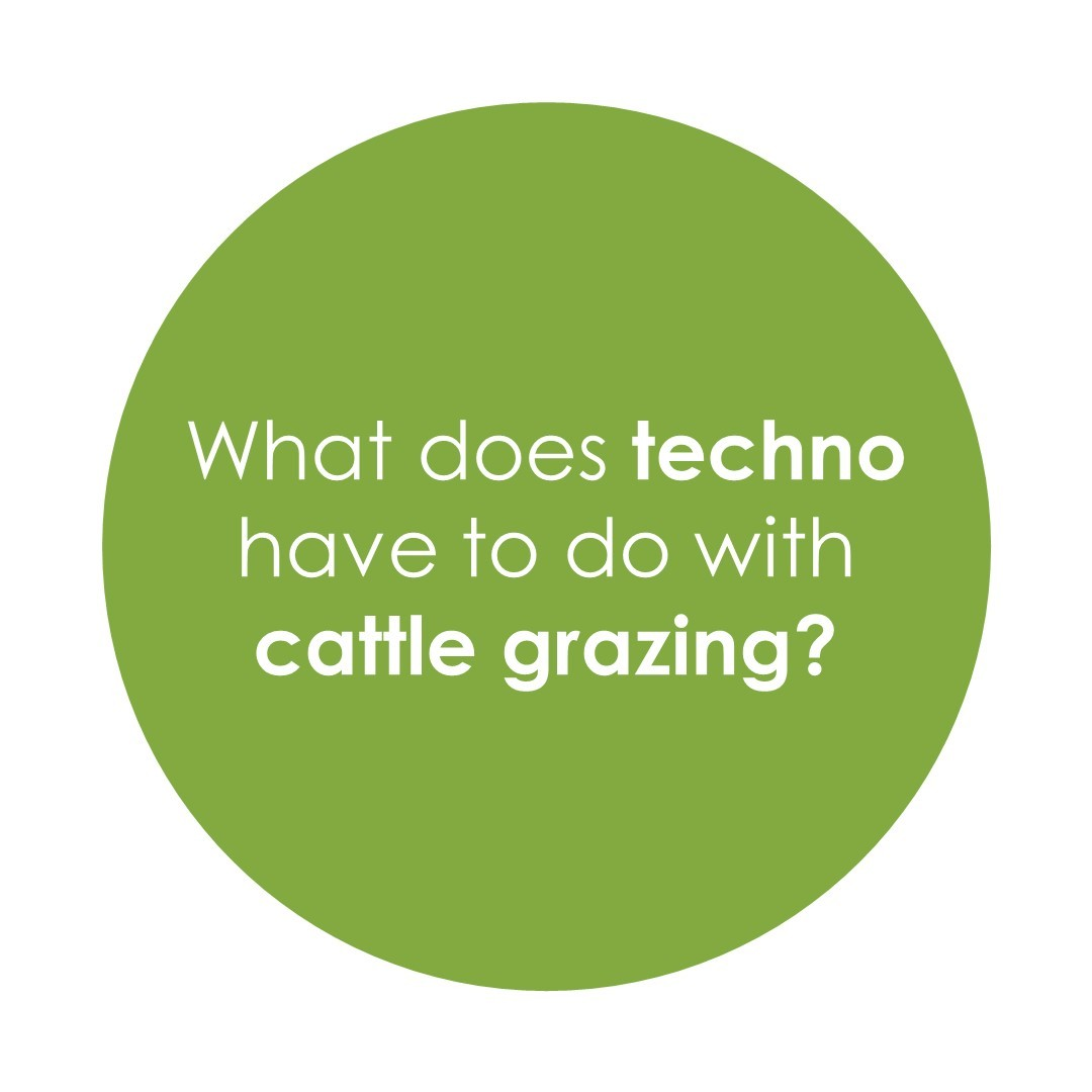 What does techno have to do with cattle grazing?