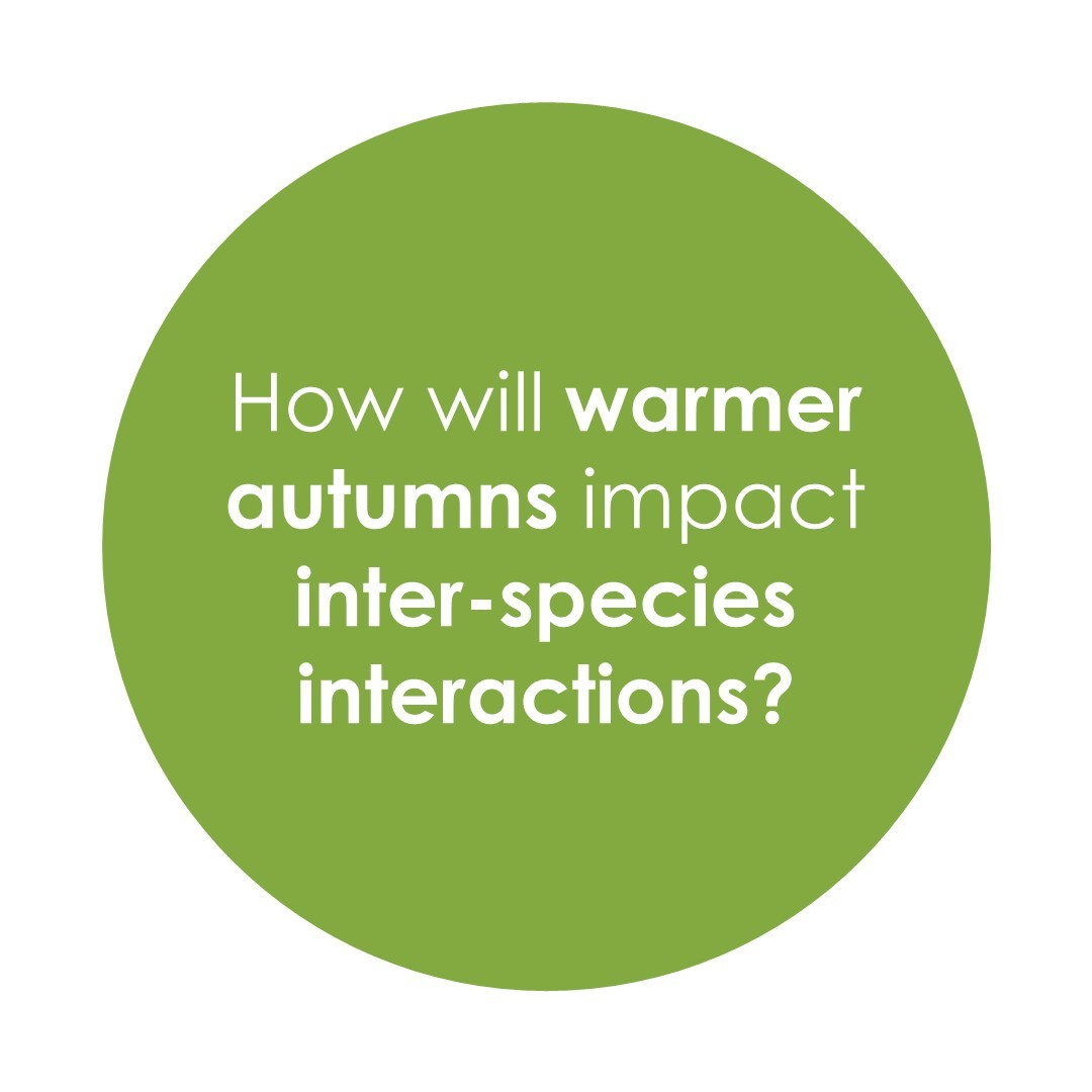 How will warmer autumns impact inter-species interactions?