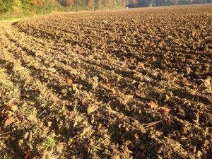 burying carbon in soil