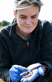 Using earthworms as indicators of soil health - Jackie Stroud, Rothamsted Research