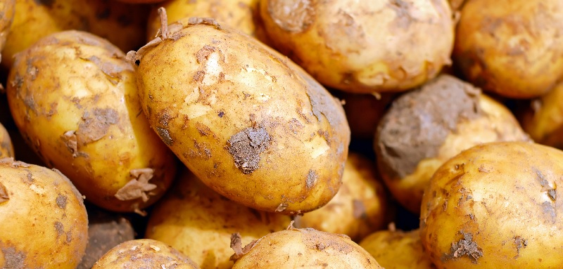 Smart irrigation becoming more attractive option for spuds
