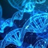 What is gene editing? Scientific community raises concerns over EU classification