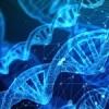 What is gene editing? Scientific community raises concerns over EU classification